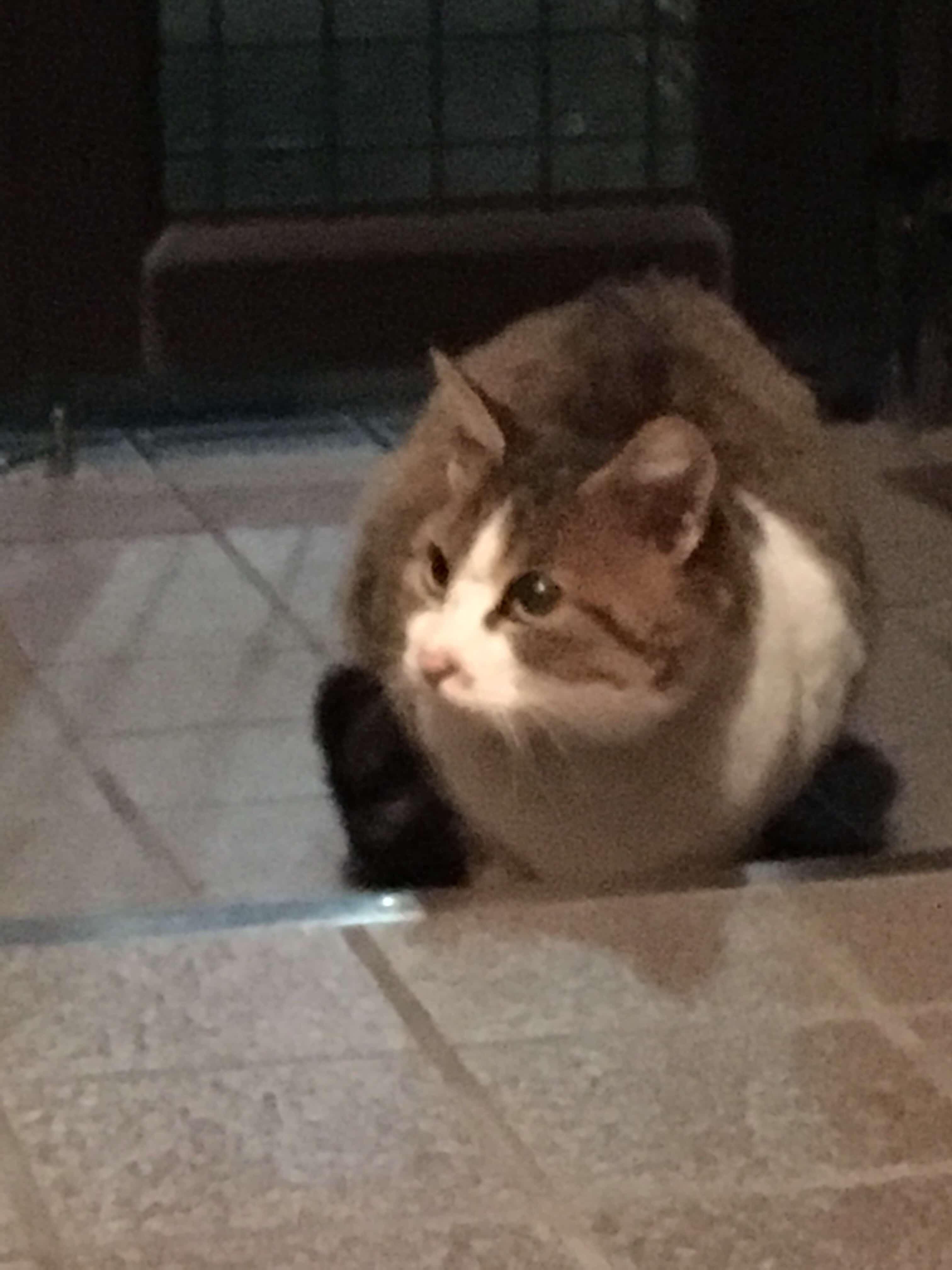 のらネコのミーちゃん