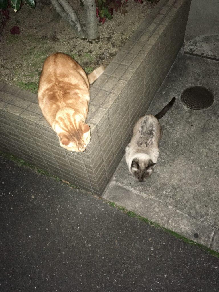 野良猫2匹