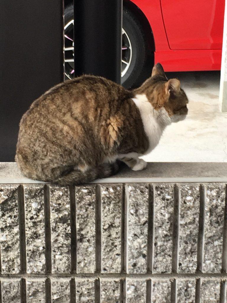 のらネコのミーちゃん、お急ぎで立ち去る。