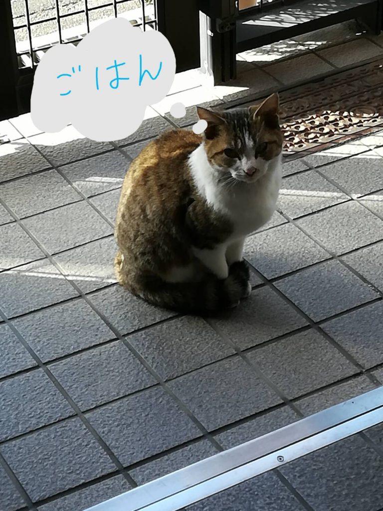 のらネコのミーちゃん、エサを食べにくる