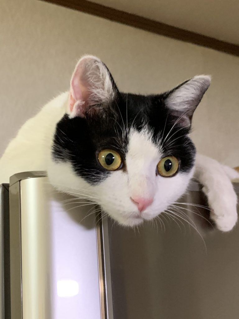 猫の目は子供のころと色が変わる