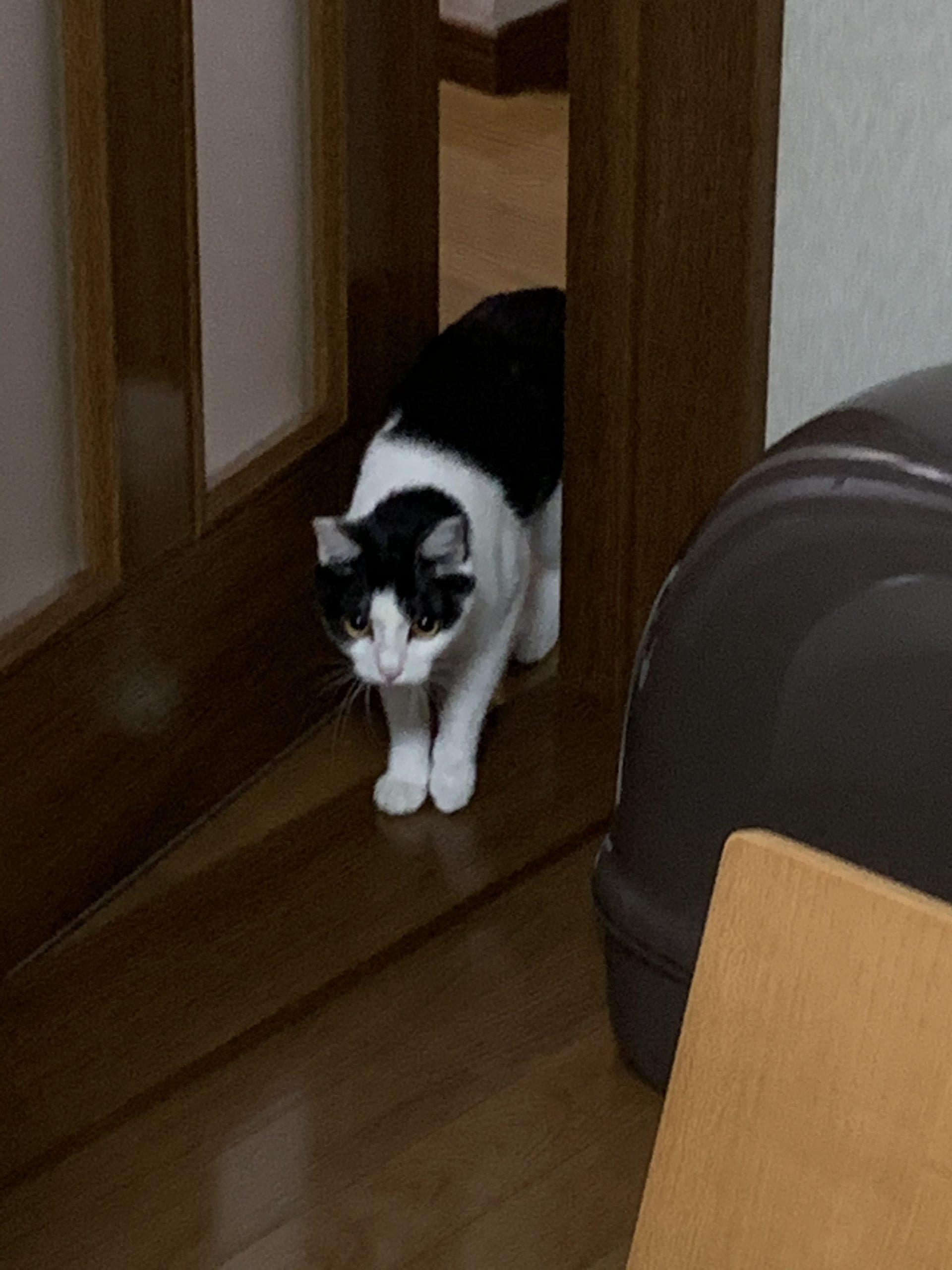 ドアを開ける福先生その3