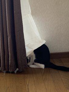 隠れてるつもりでもお尻が丸見えの福先生